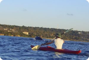 Whale-Watching-Mozambique-_0016