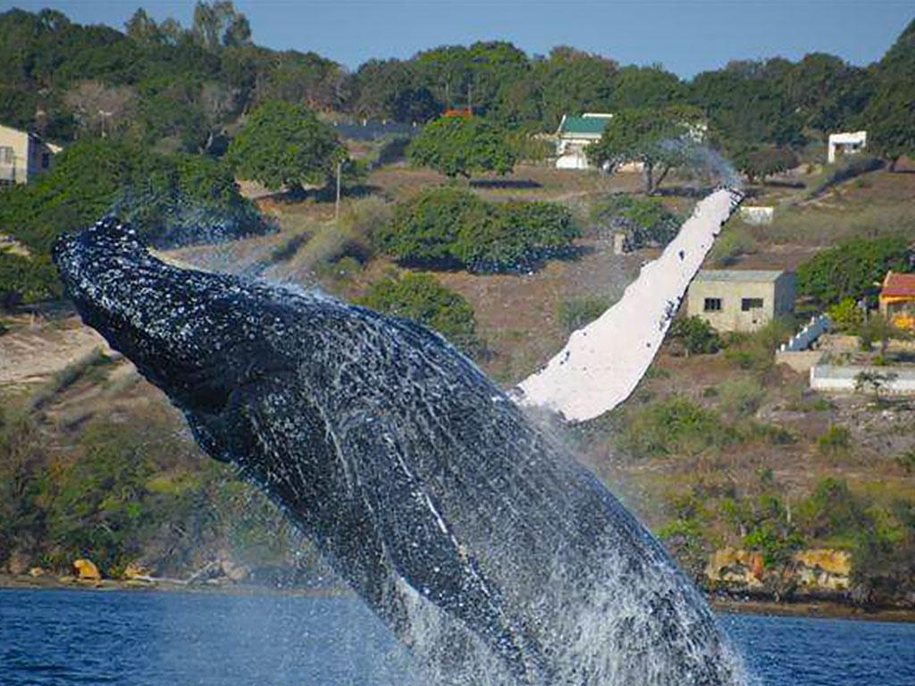 whalejump